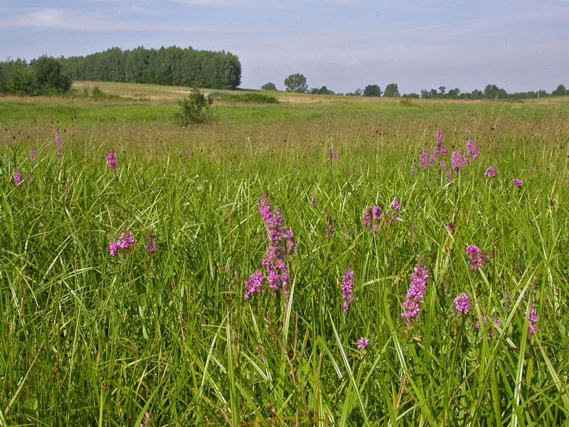 Środowisko przyrodnicze gminy Góra Kalwaria