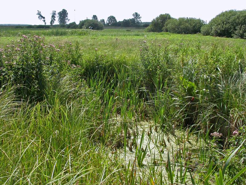 niżowe i górskie świeże łąki użytkowane ekstensywnie (Arrhenatherion elatioris)